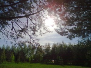 летнее утро в парке