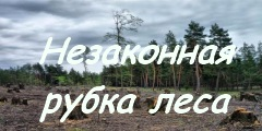 Незаконная рубка леса